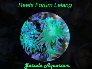 Program Lelang Garuda Aquarium
