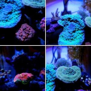 Nano Tank Reef